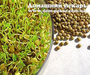 Как проращивать зеленую гречку в домашних условиях